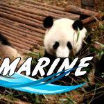 Волонтерский проект в Китае
