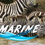 Захватывающее сафари в Танзании